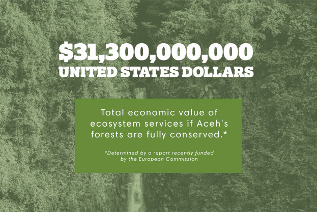 $31,300,000,000 united states dollars. Total economic value of ecosystem services if Aceh's forests are fully conserved.