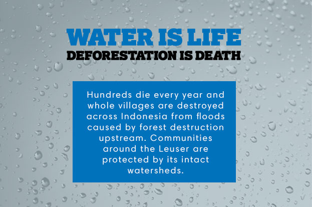 Water is Life - Deforestation is Death. Hundreds die every year and whole villages are destroyed across Indonesia from floods caused by forest destruction upstream. Communities around the Leuser are protected by its intact watersheds.