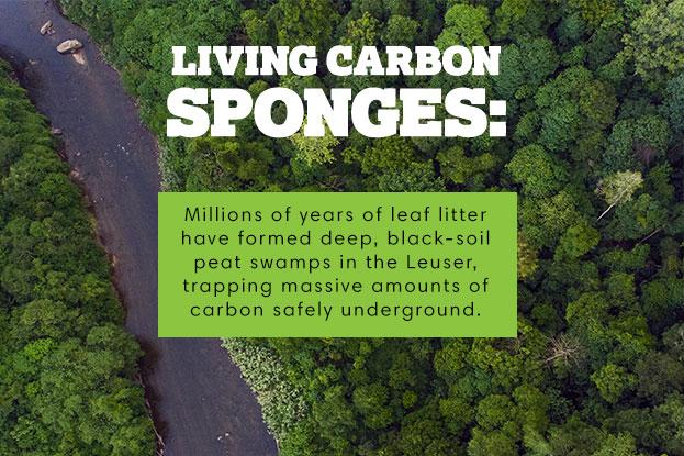 $31,300,000,000 USD: Total nilai ekonomi untuk jasa lingkungan apabila Leuser dilindungi dengan utuh.